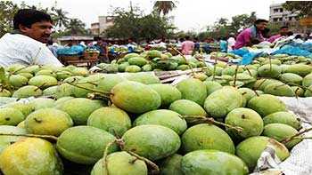 Kansat Mango Market, Chapainawabganj, one of the best places to visit in Rajshahi division.jpg