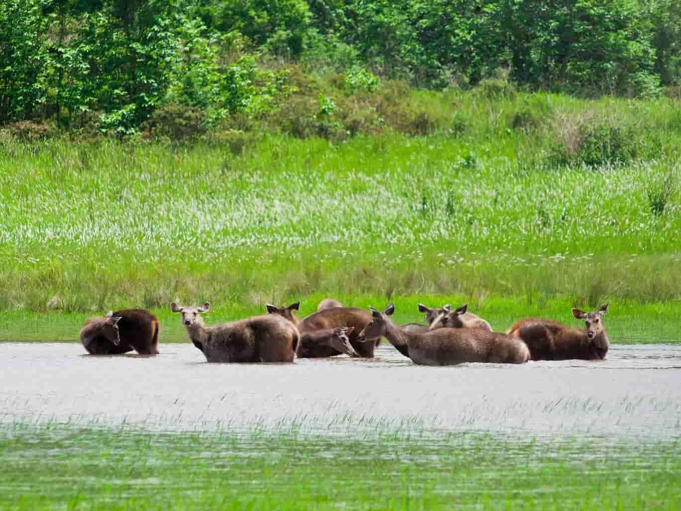 Sunarban National Park, Kolkata, India