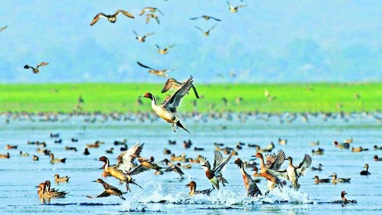 Tanguar Haor birds