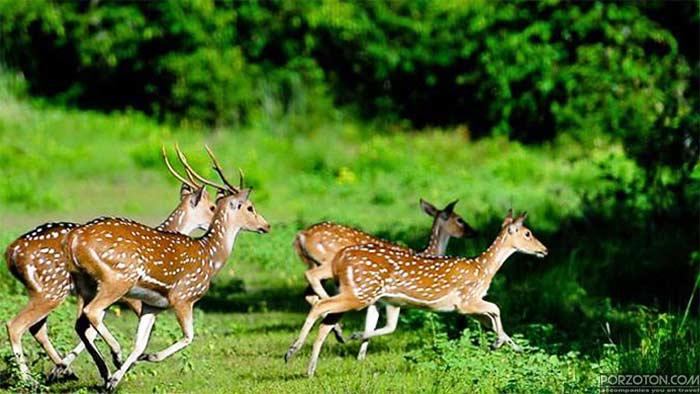 Haringhata Deer Forest, Barguna