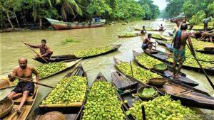 floating guava market Jhalokati