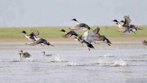 birds in Hakaluki Haor.