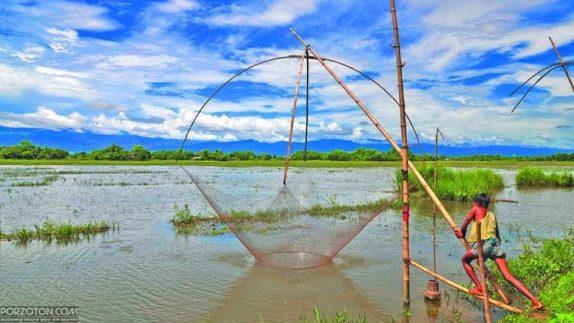 A fisherman is fishing with a net in Hakaluki Haor.