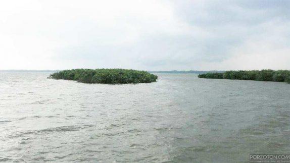 Hakaluki Swamp Forest.