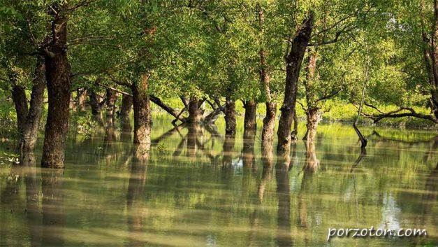 Hiron Point (Nilkamol), Sundarban, Bangladesh