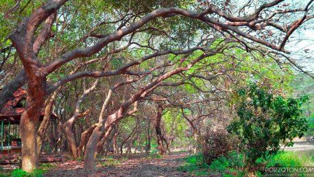 Botanical Garden Dhaka