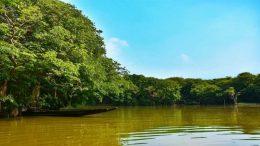 Ratargul Swamp Forest, Sylhet