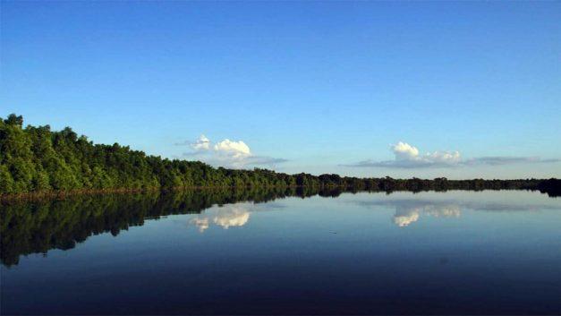 Sundarbans, The World's Largest Mangrove Forest, Bangladesh
